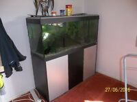 Free Goldfish to good home. (Tank filter included if required)