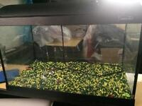 Fish tank 36 by 60