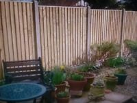 New Heavy duty tanerlized feather edge fence panels 5ftx6ft £22.00 each