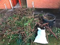 Free Tree Trimmings and Fern Tree as Firewood