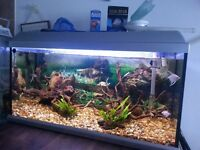 100L Tropical Fish tank with accessories and fish