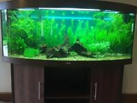 Juwel 450 bow front aquarium. VG condition