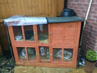 6 month old rabbits with hutch