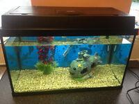 JUWEL fish tank with built in light,size is 2ft x 1ft, 60 litres,gravel,heater,plastic plant,ornamen