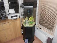 80 Litre Hexagon Aquarium and matching stand full tropical set up