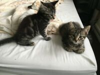 Lovely kitten available