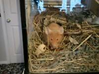 Young pet mice for sale