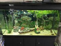 4 Foot fish tank with cabinet and full setup including nearly 200 fish