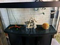260 liter JUWEL vision bow fronted fish tank and Stand For Sale full set up