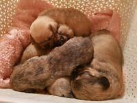 5 adorable puppies