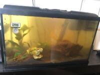 50liter fish tank