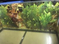 Juwel Rekord 96 Aquarium complete with filter and pump and other items