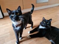 Mr Musty & Miss Mya 》8months old♡《》both neutered & vaccinated, two lovely cats, brother and sister《