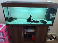 SOLD Juwel Rio240 Aquarium Fish Tank + Cabinet