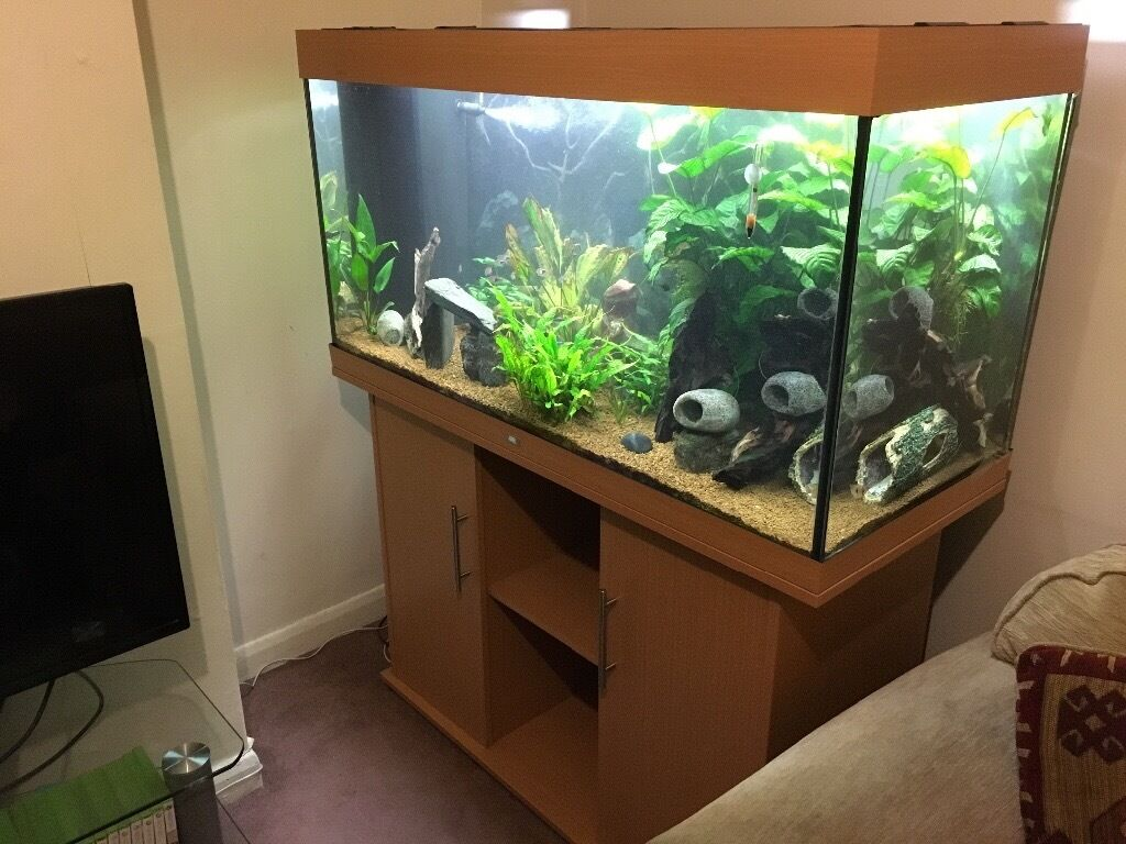 Juwel Rio 300 Aquarium and Stand with heater and pump (full setupin Kings Lynn, NorfolkGumtree - Juwel Rio 300 Fish Tank and Cupboard / stand Moving house, no space so I a require quick sale. Owned tank for over 3 years, shame to have to part ways with it but nowhere for it to go. Tank with all accessories, stand / cupboard. Juwel official...