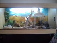 vivarium for white bearded dragon 4 feet by 2 feet by 18 inches perfect condition