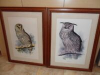 TWO LARGE FRAMED PRINTS OF OWLS