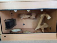 Large Beech vivarium