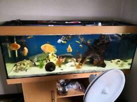 5 foot juwel fish tank full set up