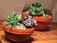 Succulant bowls