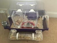 2 dwarf hamsters with cage