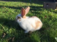 Cute baby rabbits for sale in Gloucester