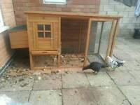 Chicken Coop excellent condition + 3 Chickens