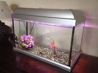 Small Goldfish Tank with Fantail Goldfish