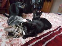Kittens for sale - £20 per.