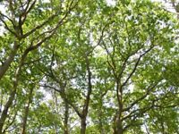 Climber required for busy tree surgeon based in West Sussex