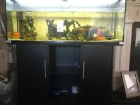 4ft fish tank with fish pump filter heater & cabinet