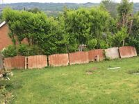 10 fence panels for sale