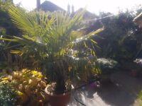 tropical garden plants for sale