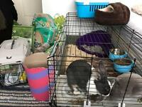Rabbit cage + equipment (perfect condition)