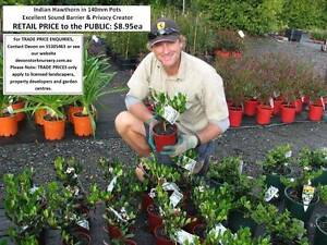 Need PRIVACY HEDGE or FENCE ALTERNATIVE? Look at These Plants Mudgeeraba Gold Coast South Preview