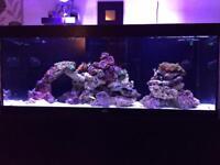 5ft marine fish tank aquarium