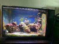 Fluval Evo Saltwater marine aquarium and contents 52 litres