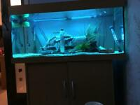 Completefish tank