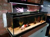 4ft aquarium with goldfish