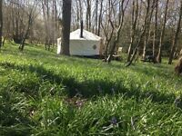 Peaceful yurt retreat in East Sussex