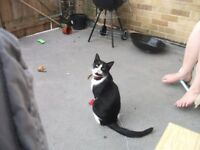 Black and white female cat in need of forever home