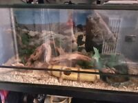 Large reptile tank with accessories