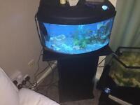 Fish tank 64l