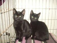 2 kittens left (SOLD)