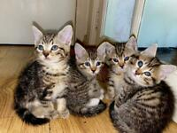 Beautiful little kittens ready to leave