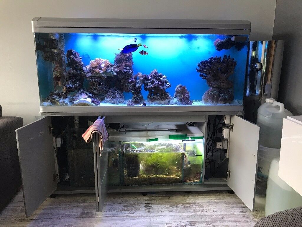 how to link fish tanks