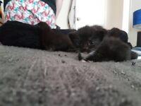 Beautiful Adventurous Kittens!