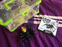 Wild Pets Spider & Habitat