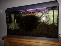 125L fish tank, fishes, shrimps and live plants