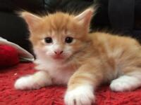 Awesome male kitten
